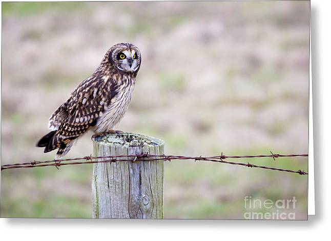 Short Eared Owl Boundary Bay Greeting Card