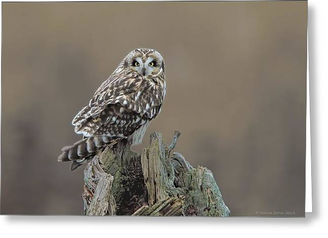 Short Eared Owl Greeting Card by Daniel Behm