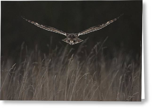 Greeting Card featuring the photograph Short Eared Owl Focused by Paul Scoullar