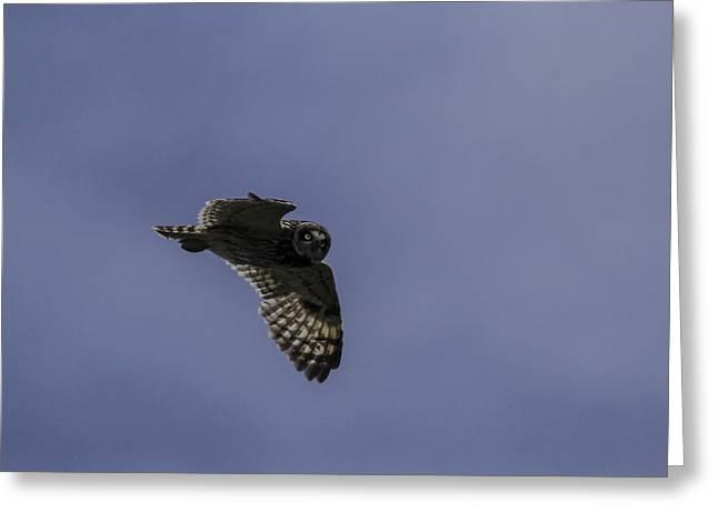 Short Eared Owl In Flight Greeting Card by Brad Scott