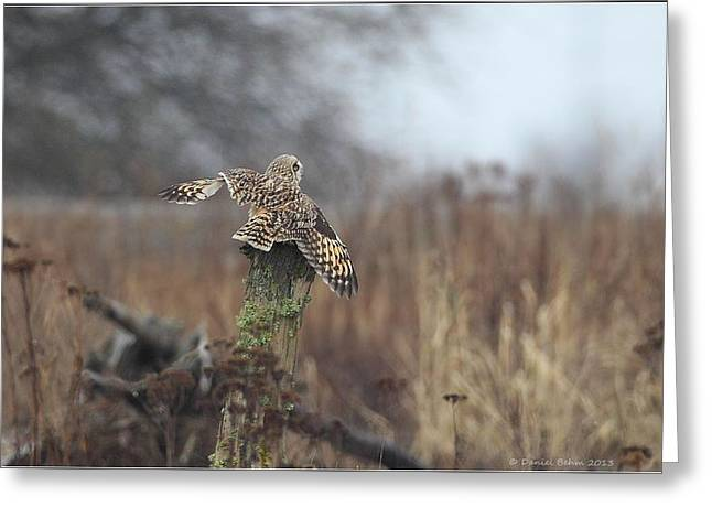 Short Eared Owl In Habitat Greeting Card by Daniel Behm