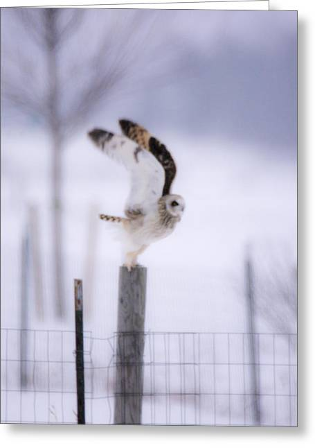Short Eared Owl Liftoff   Greeting Card by Tracy Winter