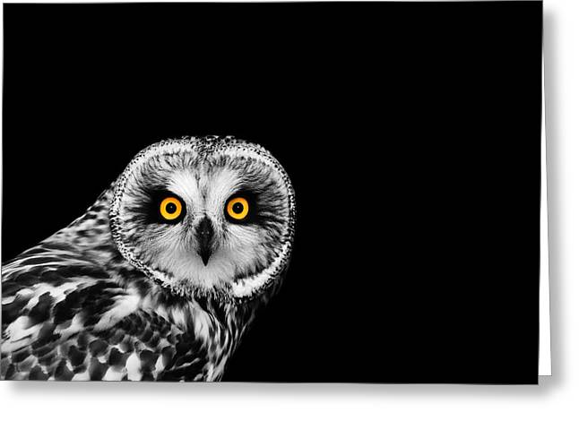 Short-eared Owl Greeting Card by Mark Rogan