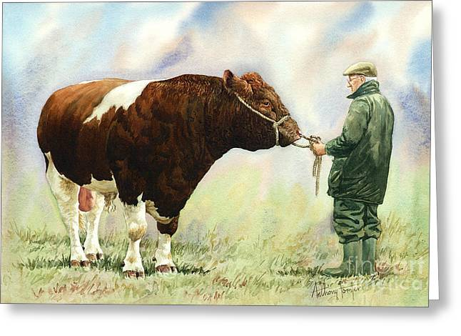 Shorthorn Bull Greeting Card by Anthony Forster