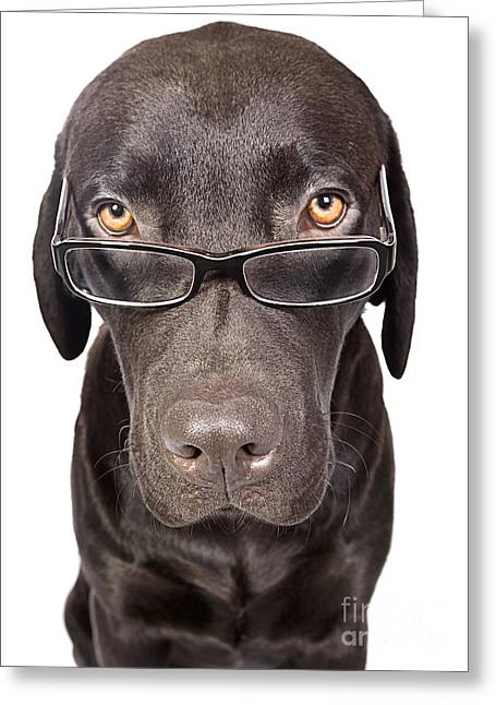 Shot Of A Cute And Clever Labrador With Glasses Greeting Card