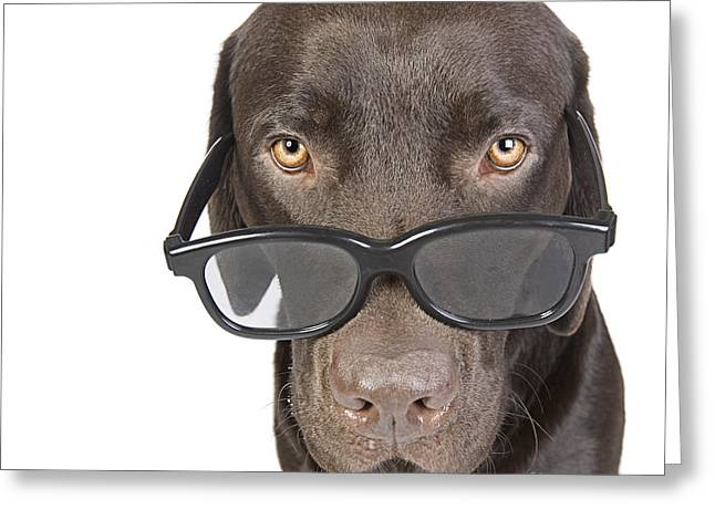 Shot Of A Cute Labrador Puppy In Geeky Glasses Greeting Card