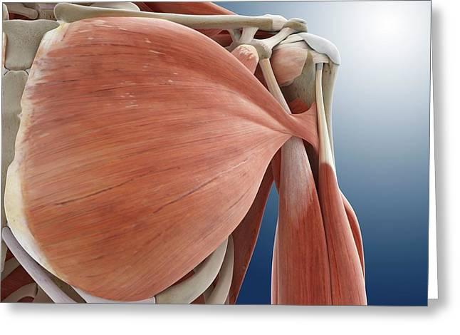Shoulder Anatomy Greeting Card