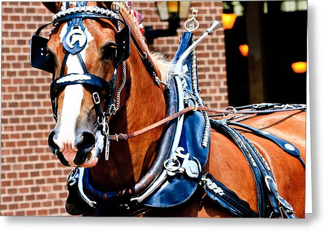 Show Horse Greeting Card