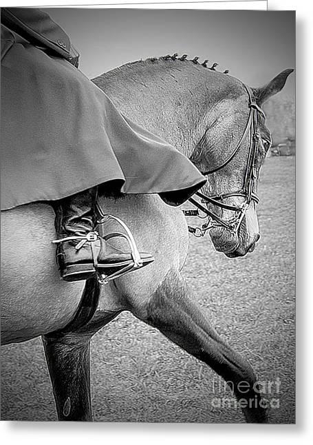 Side Saddle Show Horse Greeting Card