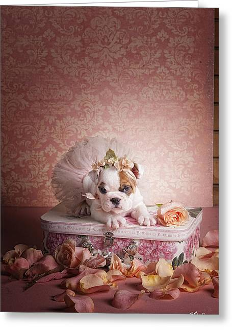 Show Time Greeting Card by Lisa Jane