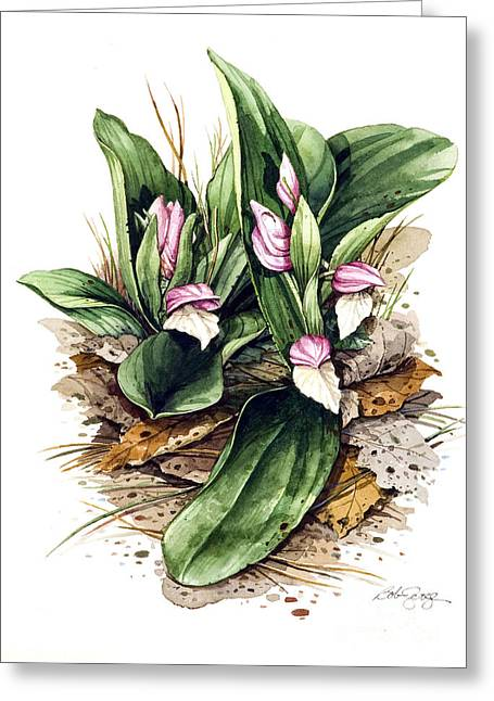 Greeting Card featuring the painting Showy Orchis by Bob  George