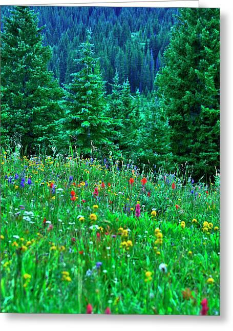 Shrine Pass Wildflowers Greeting Card by Jeremy Rhoades