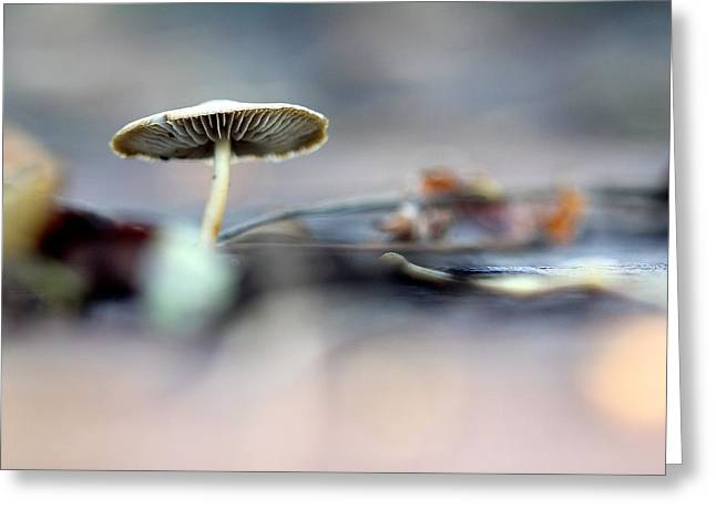 'shroom Greeting Card by Tracy Male