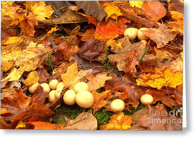 Greeting Card featuring the photograph Shrooms by Jim McCain