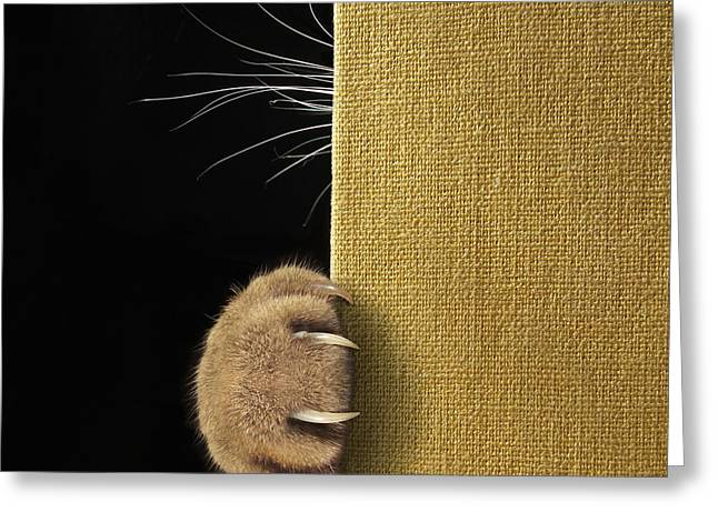 Shy Cat ... Greeting Card