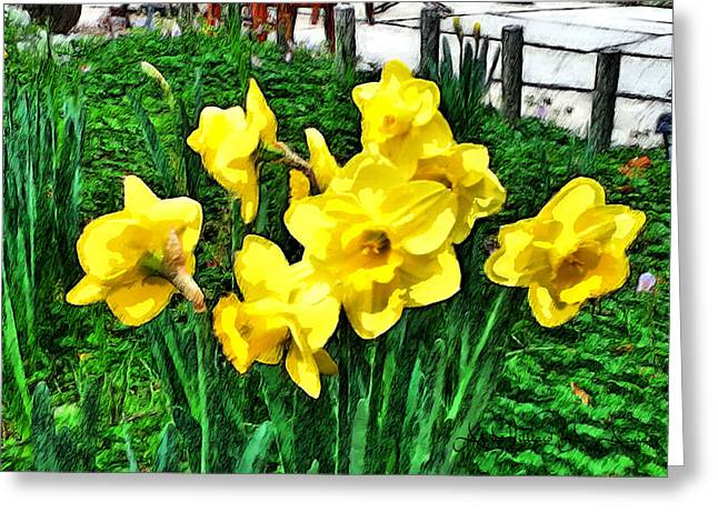Shy Daffodils  Greeting Card