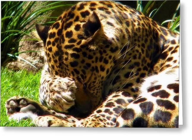Shy Leopard Greeting Card