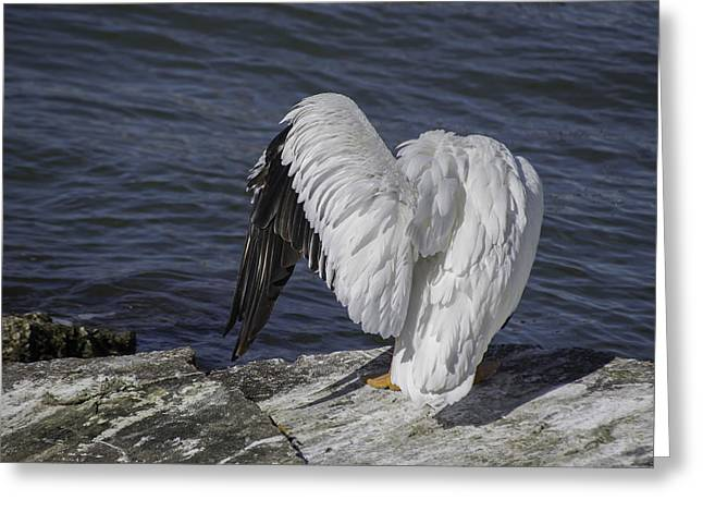 Shy Pelican Greeting Card by Diego Re