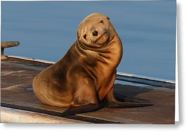 Shy Sea Lion Pup  Greeting Card