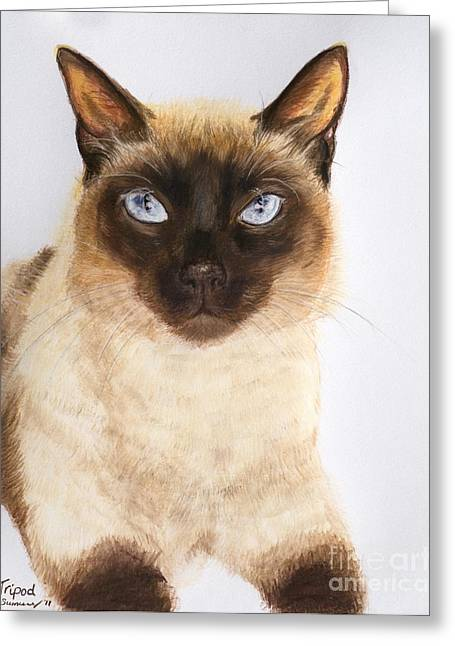 Siamese Cat Over White Greeting Card