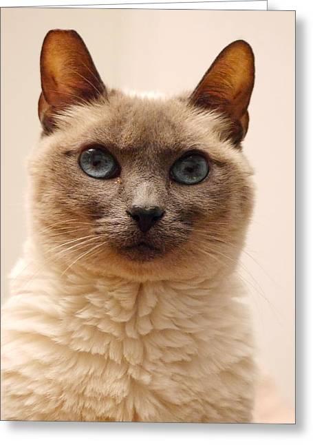 Siamese Cat Greeting Card by Richard Cheski