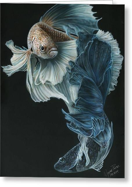Siamese Fighting Fish Three Greeting Card