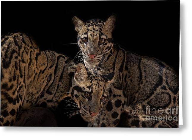 Siamese Sisters Greeting Card by Ashley Vincent