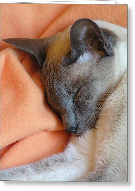 Siamese Snooze 3 Greeting Card