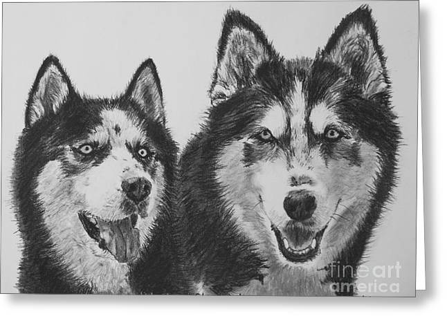 Siberian Husky Dogs Sketched In Charcoal Greeting Card by Kate Sumners