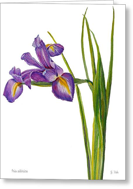 Siberian Iris - Iris Sibirica Greeting Card