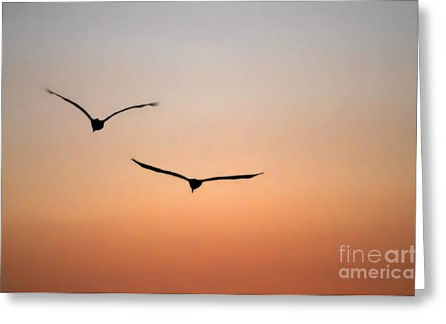 Side By Side Greeting Card by Dan Holm