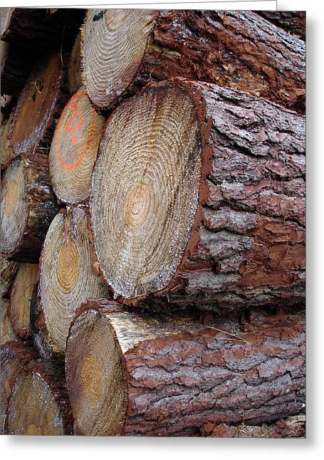 Side Log View Greeting Card by Michel Mata