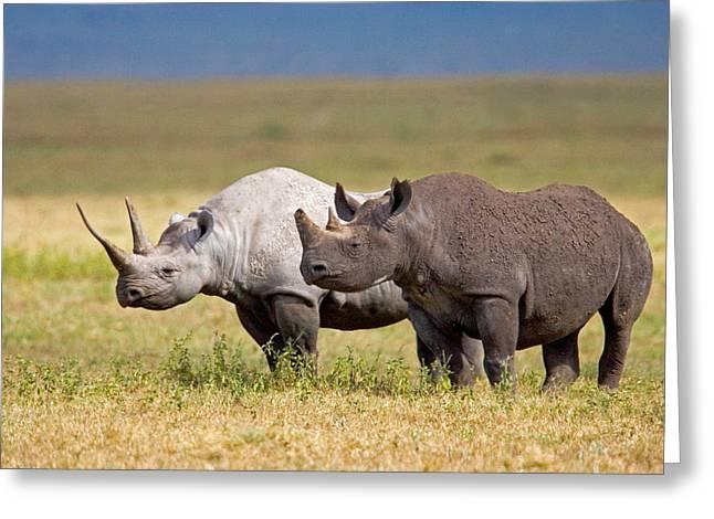 Side Profile Of Two Black Rhinoceroses Greeting Card