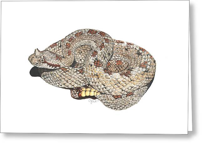 Sidewinder Greeting Card by Cindy Hitchcock
