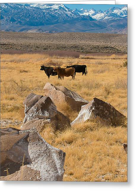 Sierra Cattle Greeting Card