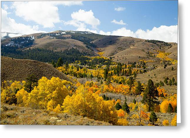 Sierra Foliage Greeting Card by Jim Snyder
