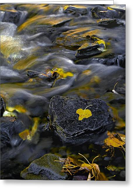 Sierra Stream Greeting Card