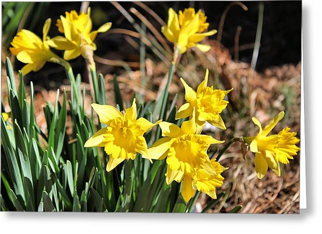 Sign Of Spring Greeting Card by Carolyn Ricks