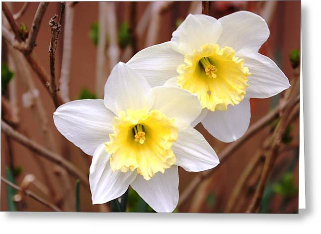 Greeting Card featuring the photograph Sign Of Spring by Judy Palkimas