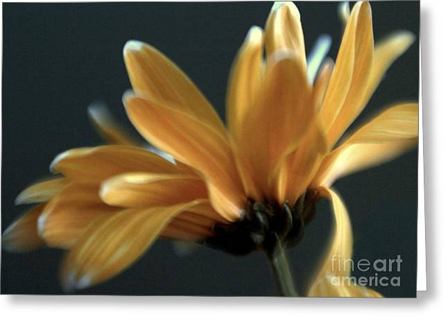 Greeting Card featuring the photograph Signature Daisy by Mary Lou Chmura