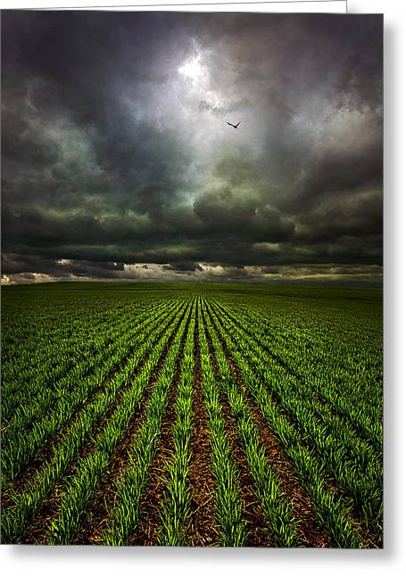 Signs Of Life Greeting Card by Phil Koch