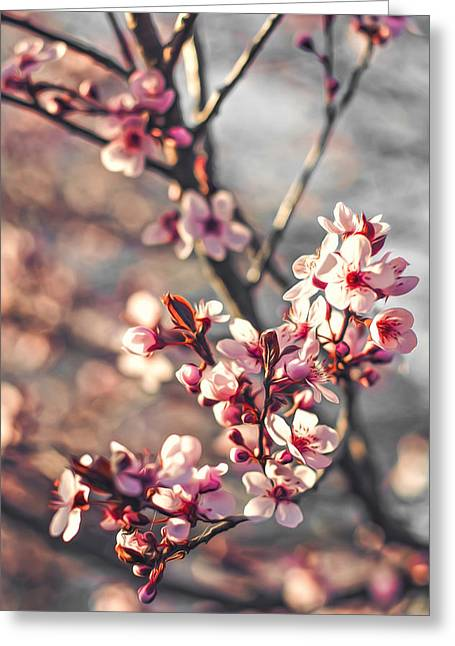Greeting Card featuring the photograph Signs Of Spring by Joshua Minso