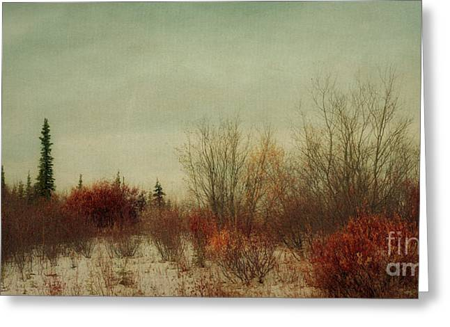 Signs Of Winter Greeting Card by Priska Wettstein