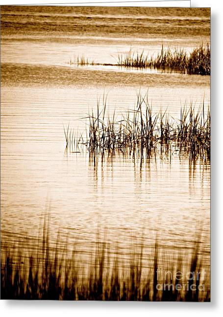 Silence Greeting Card by Q's House of Art ArtandFinePhotography