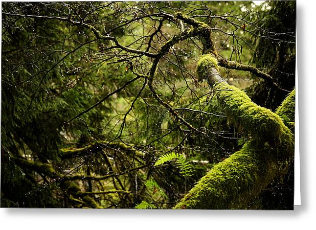 Silence In The Green Forest Greeting Card