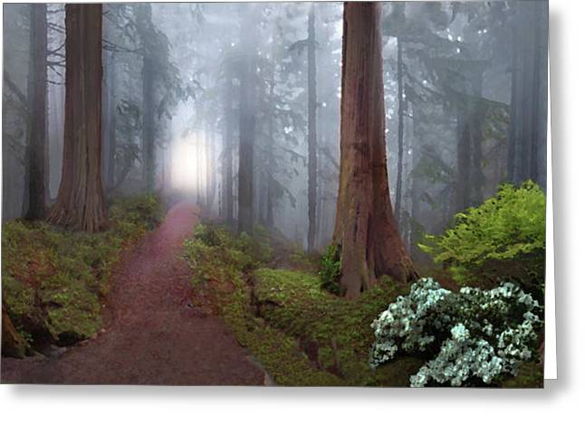 Silence Of The Forest Greeting Card by David M ( Maclean )