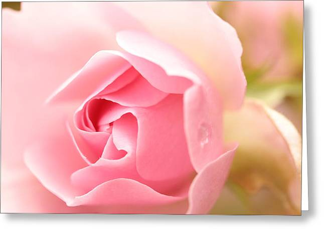 Silence Of The Heart Greeting Card by Connie Handscomb