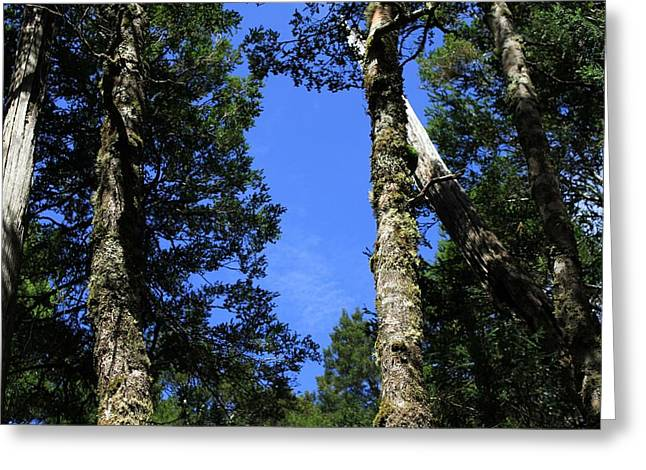 Silent Giants All Profits Go To Hospice Of The Calumet Area Greeting Card
