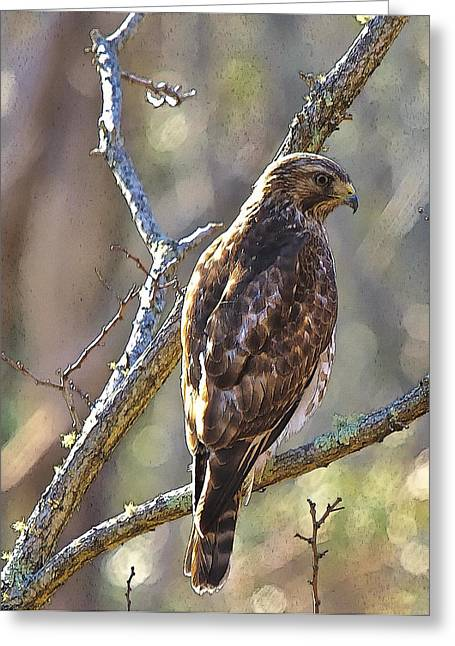Silent Hunter Greeting Card by Constantine Gregory