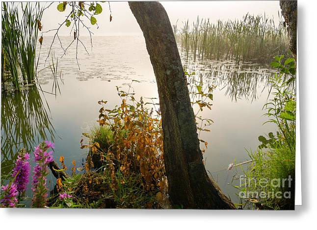 Silent Lakeside Greeting Card